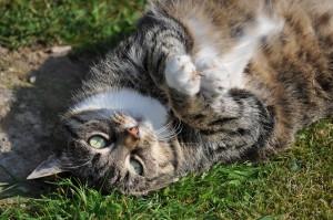 Ожирение у кошек и собак