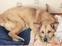 Хроническая почечная недостаточность у собак