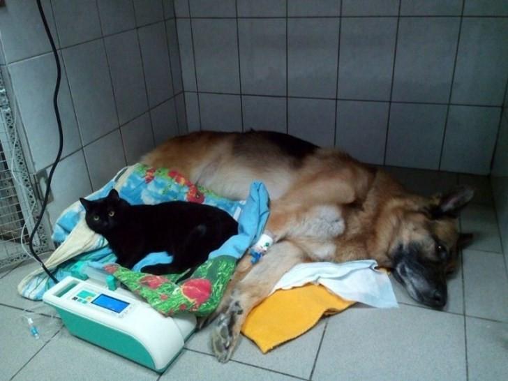 симптомы и лечение собак